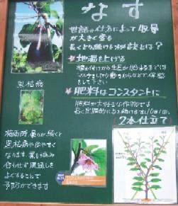 緑・なす1.JPG