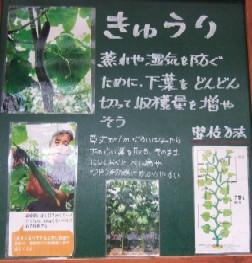 緑・キュウリ1.JPG