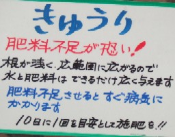 緑・キュウリ2.JPG