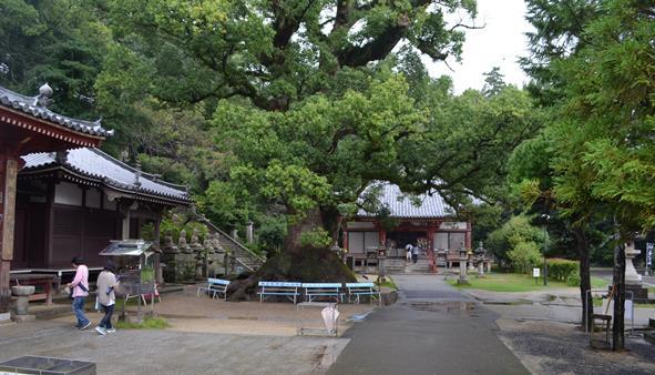 観音寺10・境内、正面本堂.JPG