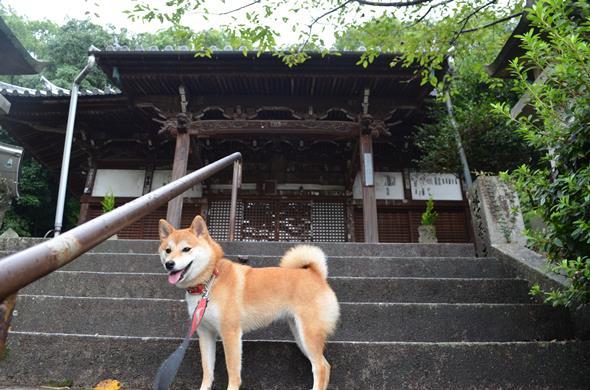 観音寺12・薬師堂.JPG