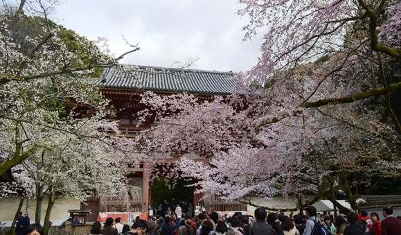 醍醐寺20・伽藍仁王門.JPG