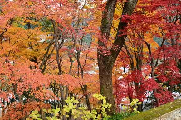 長谷寺68・奥の院付近の紅葉.jpg