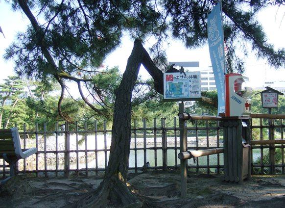 高松14・鯛のエサやり体験.JPG