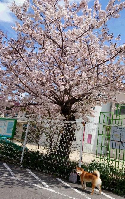 はな3・聖マリア幼稚園前.jpg