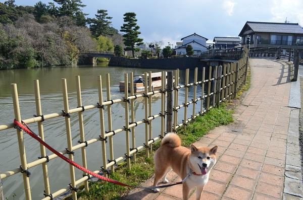 松江4・お濠と遊覧船.jpg