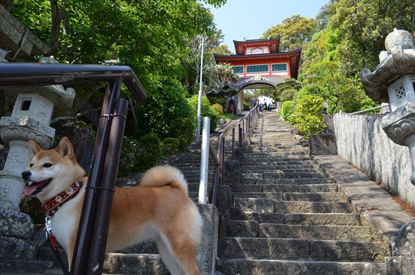 津照寺14・125段の急な石段.JPG