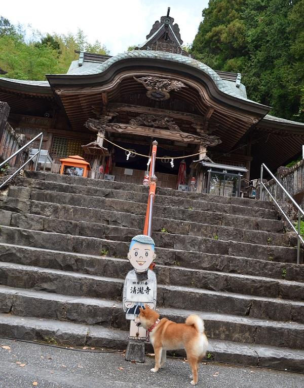 清瀧寺17・石段の上が本堂.jpg
