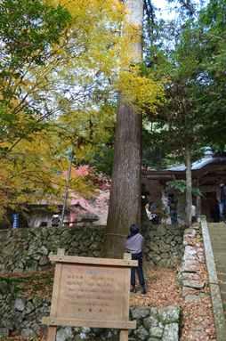 石龕寺20・コウヨウザン.jpg